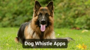 10 Best Dog Whistle Apps for Android and iOS