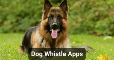 Dog Whistle Apps